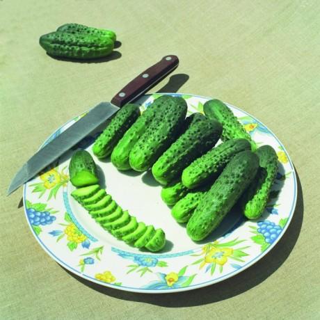 ALLIANZ F1, lauko agurkai, 10 gramų