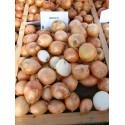MUSICA H, valgomieji ropiniai svogūnai, 150 sėklų
