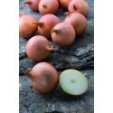 HYBOUND H, valgomieji ropiniai svogūnai, 250 sėklų