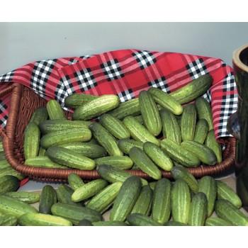 AKORD F1, lauko agurkai, 10 gramų