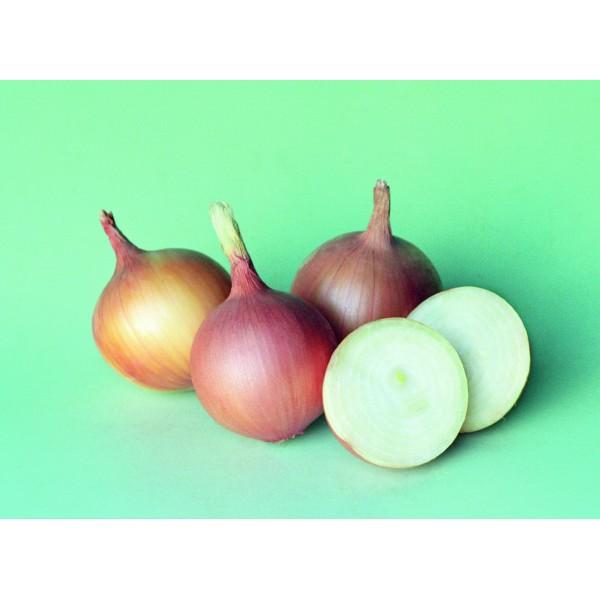 SANGRO H, valgomieji svogūnai, 250 sėklų
