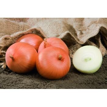 SAFRANE H, ropiniai svogūnai, 200 sėklų