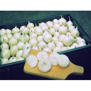 ALBION H, ropiniai svogūnai, 200 sėklų