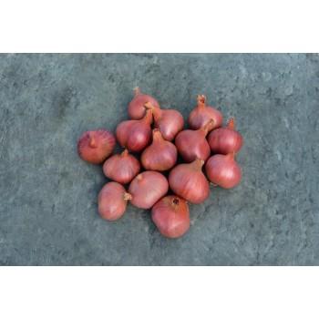 AMBITION H, askaloniniai česnakai, 75 sėklos