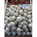 STARDUST, ropiniai svogūnai, 200 sėklų