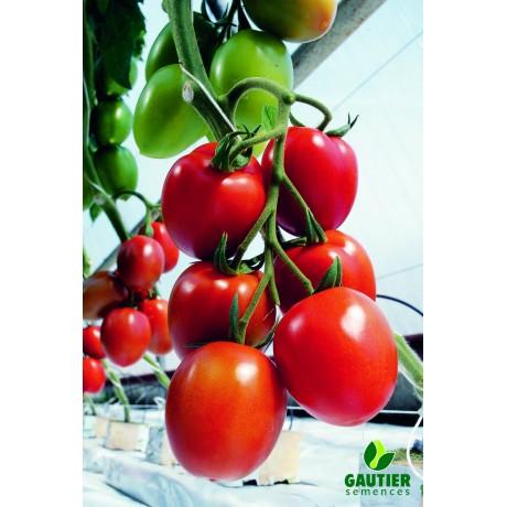 MYRIADE HF1, valgomieji pomidorai, 100 sėklų