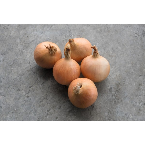 DRITAN H, ropiniai svogūnai, 250 sėklų