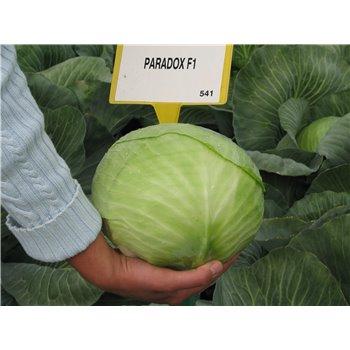 PARADOX F1, baltieji gūžiniai kopūstai, 2500 sėklų