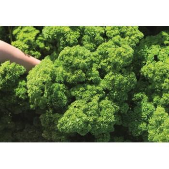 PETRA, lapinių petražolių sėklos, 2 g