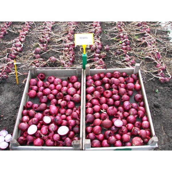 RED BARON, valgomieji ropiniai svogūnai, 250 sėklų