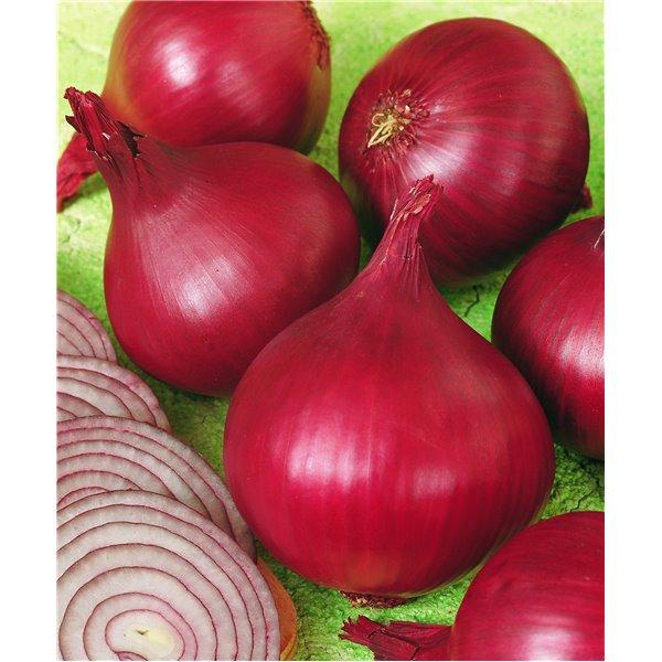 Ropiniai raudonieji svogūnai RED BARON, 10000 sėklų