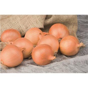 ALONSO H, valgomieji svogūnai, 250 sėklų