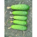 AMANT H, savidulkiai agurkai