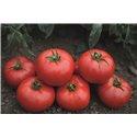 TOMSK H, pomidorai (žemaūgiai)