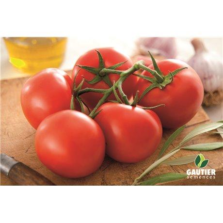 KALIXO HF1, valgomieji pomidorai, 5 sėklos