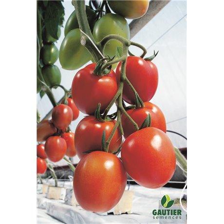 MYRIADE HF1, valgomieji pomidorai, 5 sėklos