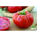 Desertiniai pomidorai MARBONNE HF1
