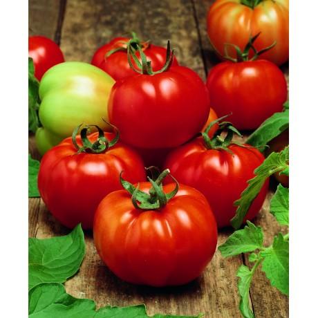 SULTAN F1, valgomieji pomidorai, 5 gramai