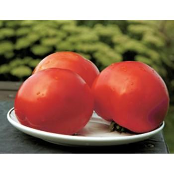 POLBIG H, valgomieji pomidorai