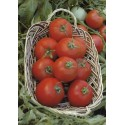 POLBIG F1, valgomieji pomidorai, 5 gramai