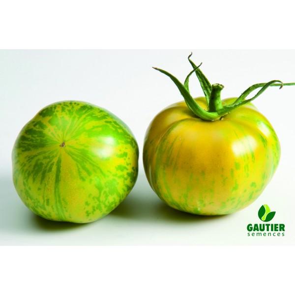 TIVERTA HF1, valgomieji pomidorai, 100 sėklų