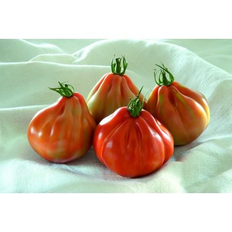 BARTOLINA HF1, valgomieji pomidorai, 100 sėklų