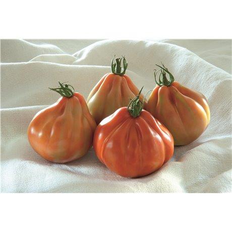 BARTOLINA HF1, valgomieji pomidorai, 5 sėklos
