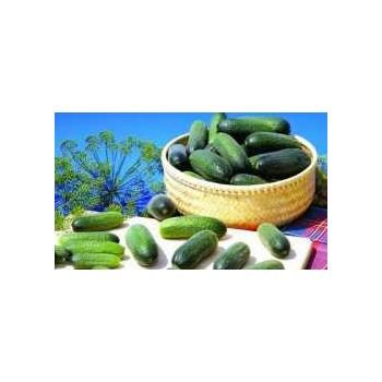 ADAM F1, savidulkiai agurkai, 250 sėklų