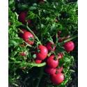 SULTAN F1, valgomieji pomidorai, 5 gramai - BEJO ZADEN PAKUOTĖ