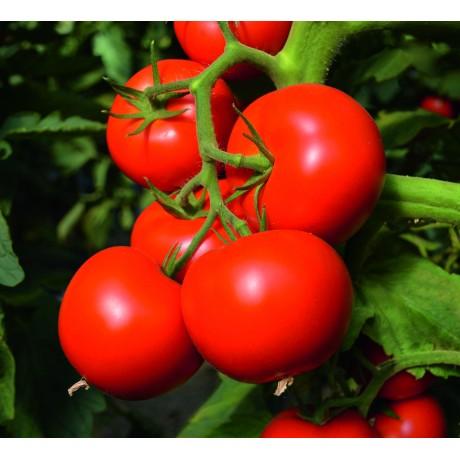 TOIVO F1, valgomieji pomidorai, 250 sėklų